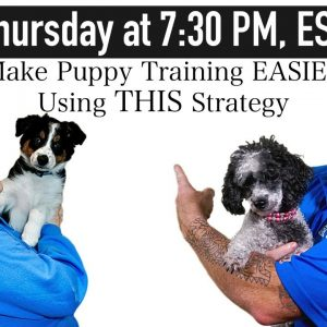 Puppy Training - Your Expectations Determine Your Reality