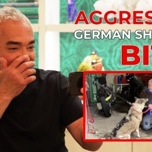 REACTING TO WHEN AN AGGRESSIVE GERMAN SHEPHERD BIT ME!