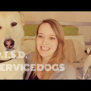 SERVICE DOGS & PTSD!