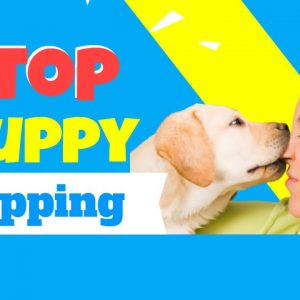 Stop Puppy Nipping