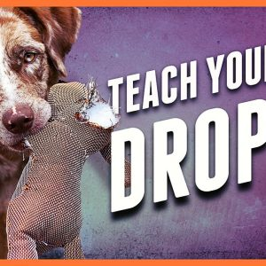 Teach a Dog to Drop It - Get polite mouth control with Tug