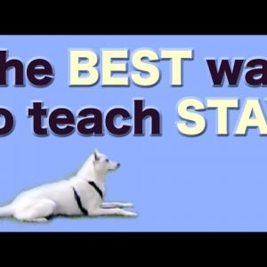 The BEST and FASTEST way to teach STAY - stay training, stay fun!