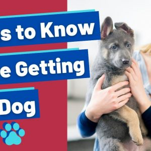 Things To Know Before Getting a Dog So You Avoid The Puppy Blues