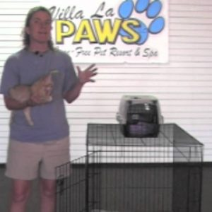 Villa La PAWs - How to Introduce Your New Cat to Your Dogs