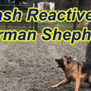 Leash Reactive German Shepherd-Tips