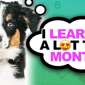 Puppy Training Expectations And Goals For The First Month