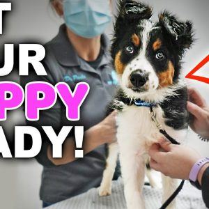 Take The Stress Out Of Your Puppy's First Vet Visit With These 5 Tips