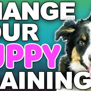 The 4 Puppy Training Rules That Will Change Your Life