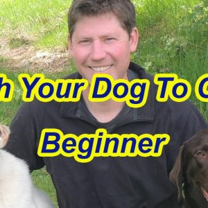 Training Labrador to Come- Beginner Steps