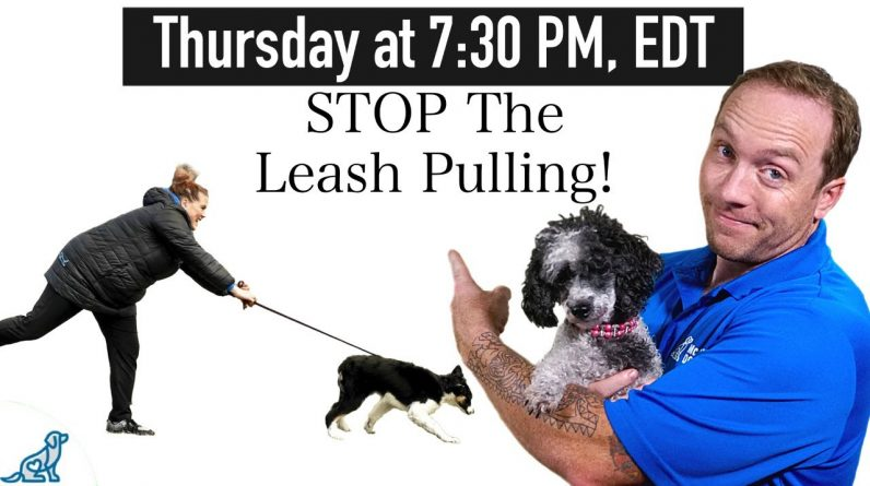 10 Tips To Stop Your Dog From Pulling On Leash When You Walk