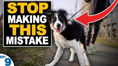 5 Mistakes People Make When Teaching A Puppy To Walk On Leash