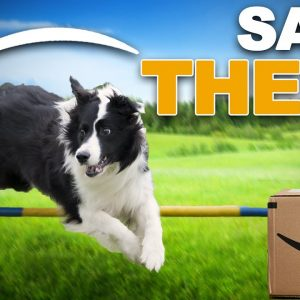 Use Your Empty AMAZON Boxes To Teach These COOL Dog Tricks