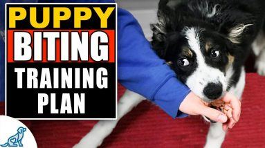 Your Complete Guide To Puppy Biting Training