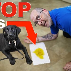 Stop Accidents Indoors With THIS Puppy Potty Training Plan