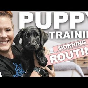 5 Puppy Training WINS You Should Get EVERY Morning!