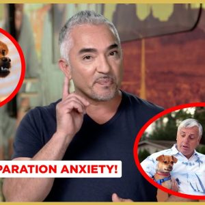 How to Solve Separation Anxiety! (Dog Nation Shorts!)