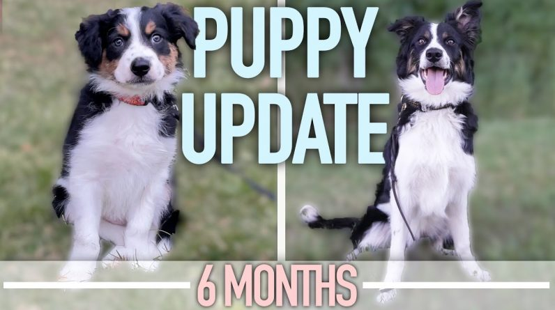 Puppy Training Goals - The Good, The Bad And The Ugly