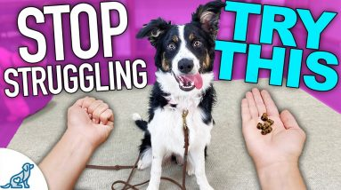 Solve 3 Puppy Training Problems With THIS One Game!