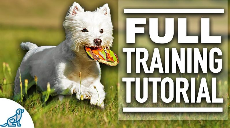 7 Steps To The PERFECT Fetch! - For Food Motivated Dogs