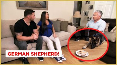 How To Develop Boundaries around Food with your Dog! (Dog Nation Shorts)
