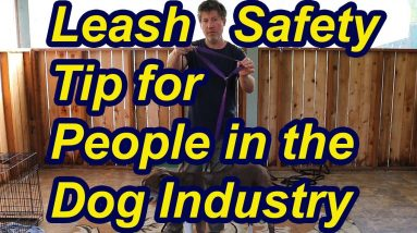 Leash safety tip for people in the dog industry