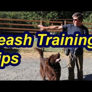 Leash Training Tips with Newfoundland Puppy