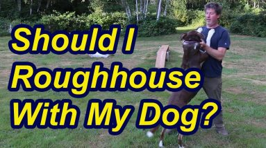 Should you roughhouse with your dog?