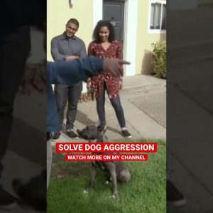 Solving Dog Aggression with Sho-Nuff on Dog Nation