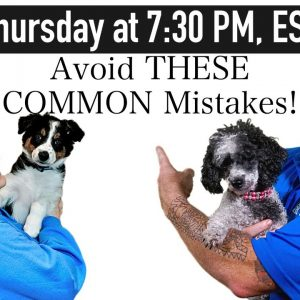 The 5 MOST COMMON Dog Training Mistakes And How To Fix Them!