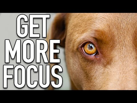 The 5 Rules For Training Your Dog To Listen Outside