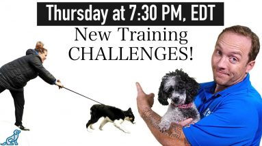 The New Dog Training Challenges After Lock Downs