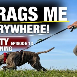 Trying to Train This WILD Pit Bull to Heel!!! (PS, he catches the double disc catch too!!) Ep 13