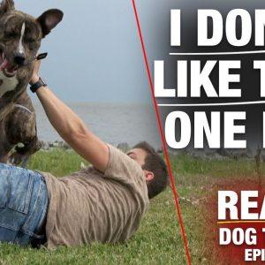 My Most Epic Battle. [Reality Dog Training Ep. 12]