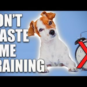 Wondering How Long To Train Your Puppy For? Use THESE Rules!