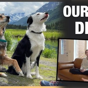 Dealing with the death of our dog.