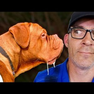 Teach Your Dog To Stop Jumping - Are BIG Dogs A BIG Challenge?