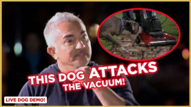 This Dog ATTACKS the Vacuum! (Live Demonstrations)