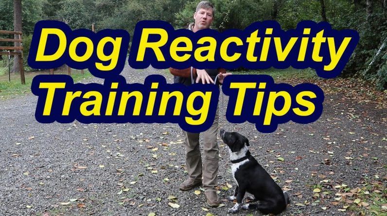 Tip for Leash Reactive Dogs- Building Engagement